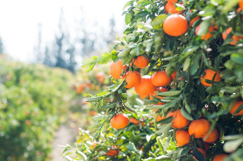 Экологически чистые фрукты на Кипре